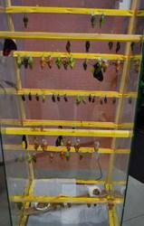 Высоко рентабельный  бизнес ферма Живых Тропических Бабочек  из Филиппин